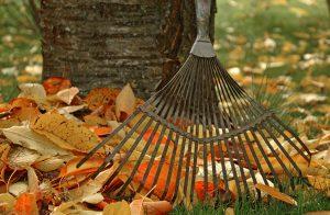 mantenimiento de jardines en murcia