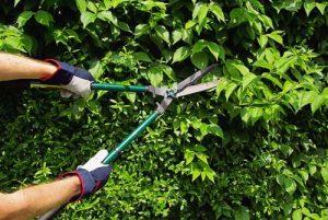 mantenimiento jardin murcia